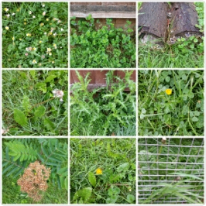 30 Days Wild – Day 1: Nature In Our Garden