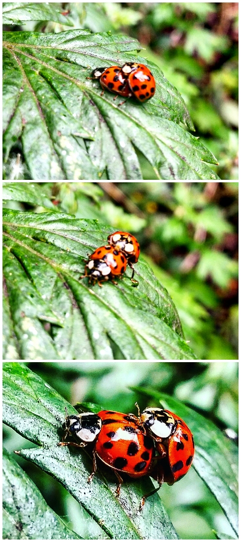 Stay Wild: Ladybirds