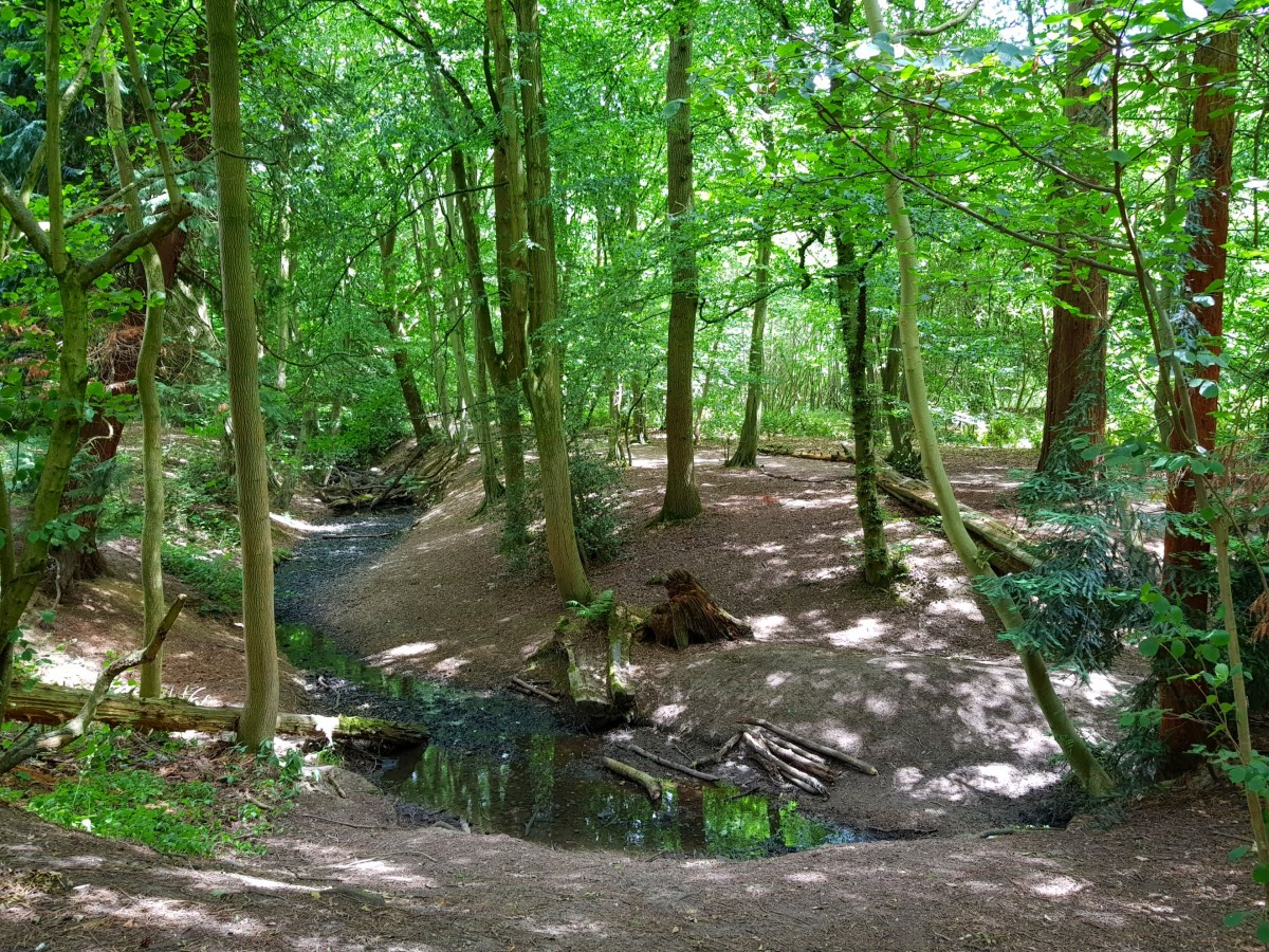 Gobions Wood, Hertfordshire: A Magical Place To Explore