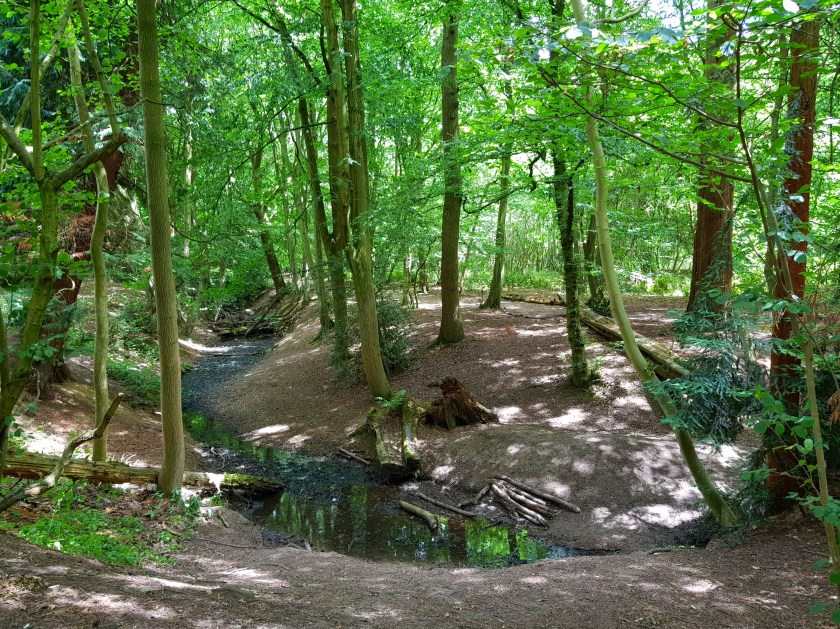 The Wildlife Trust, 30 days wild, #30dayswild, #livinglifewild, nature reserve, nature, wildlife, natural environment, woodland, outdoors, get outside, childhood unplugged, visit Herts, places to visit, Gobions Wood, Hertfordshire, things to do, family fun, explore outdoors, Living Life Our Way