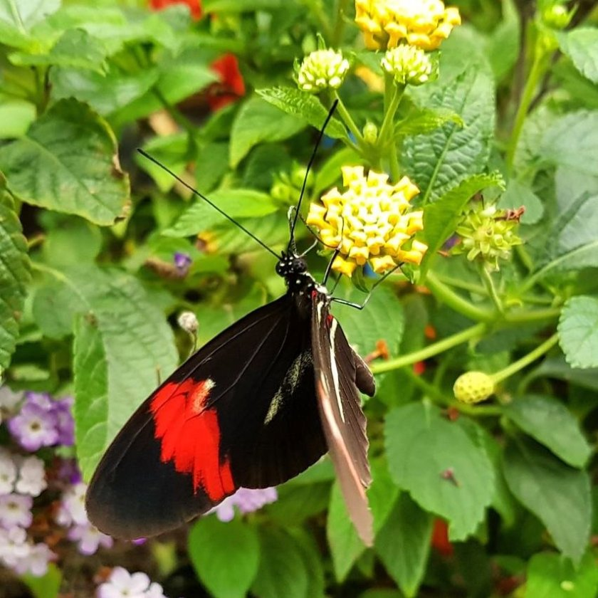 butterfly, insect, pollinator, nature, places to visit, Aylett Nurseries, Hertfordshire, Living Life Our Way