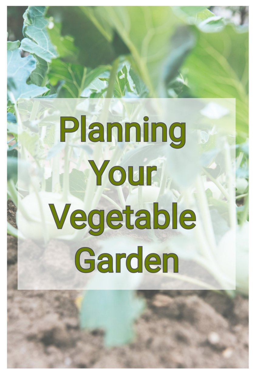garden,gardening,fruit and veg growing,grow your own,growing food,clean eating,green living, outdoors, wellbeing