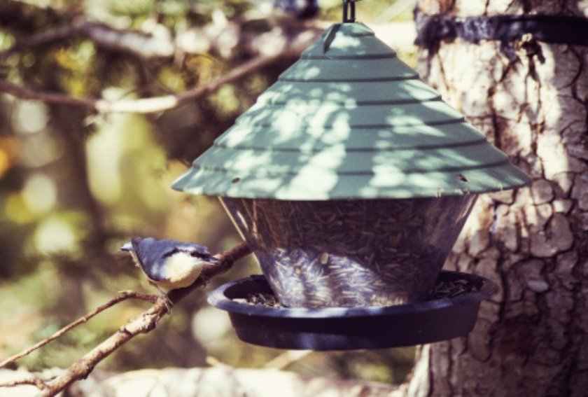 A small bird next to a large hanging bird feeder.