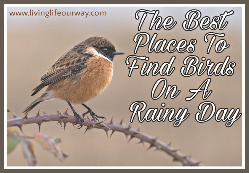 A picture of a bird on a thorny branch with the title 'The Best Places To Spot Birds On A Rainy Day' and blog address.