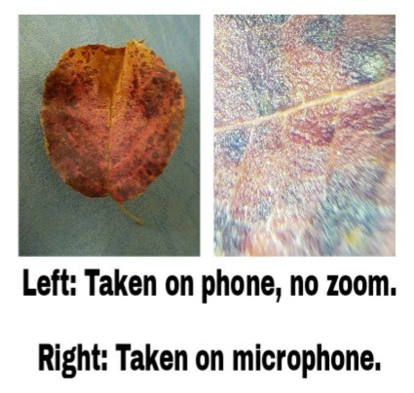 Discovery Channel Smart Phone Microscope - leaf under the microscope.