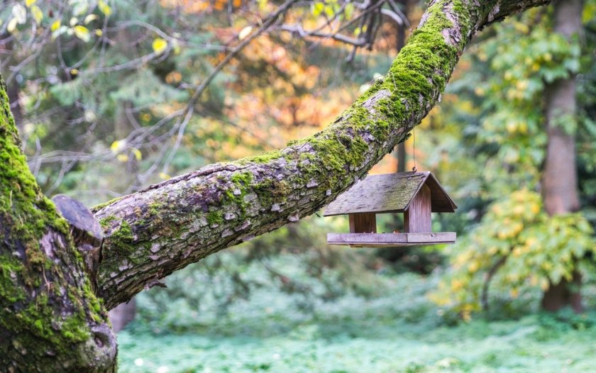 Bird house hanging from a branch of a tree