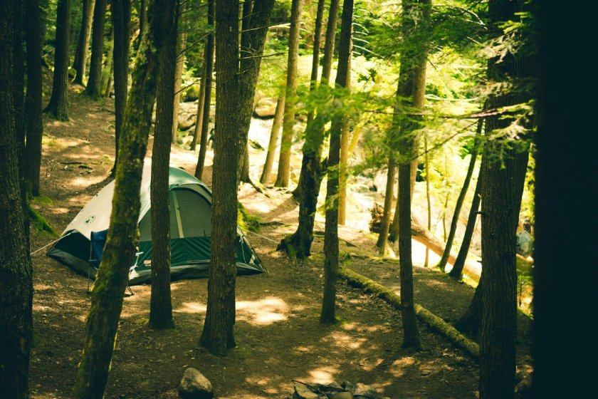 A tent in the forest