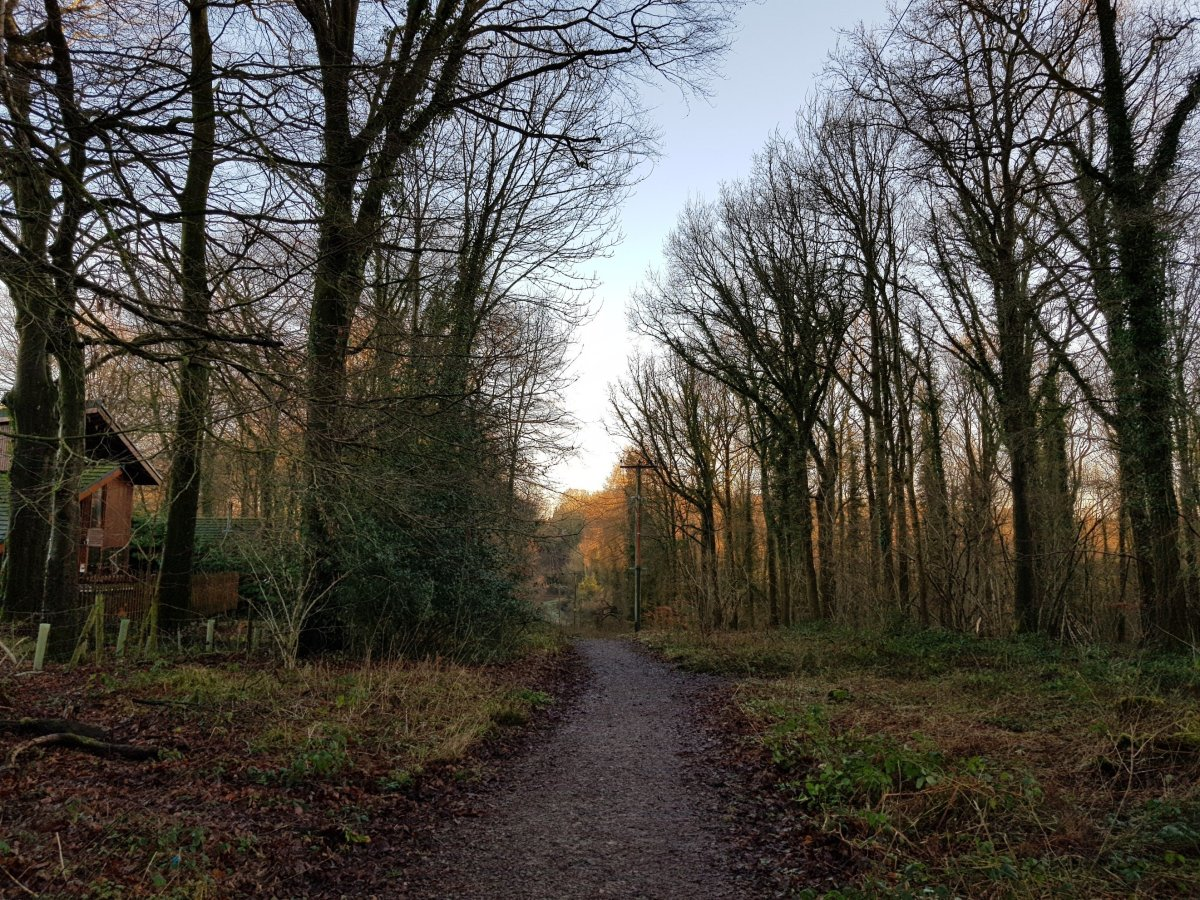 Forest Holidays: Our Winter Retreat to Forest of Dean