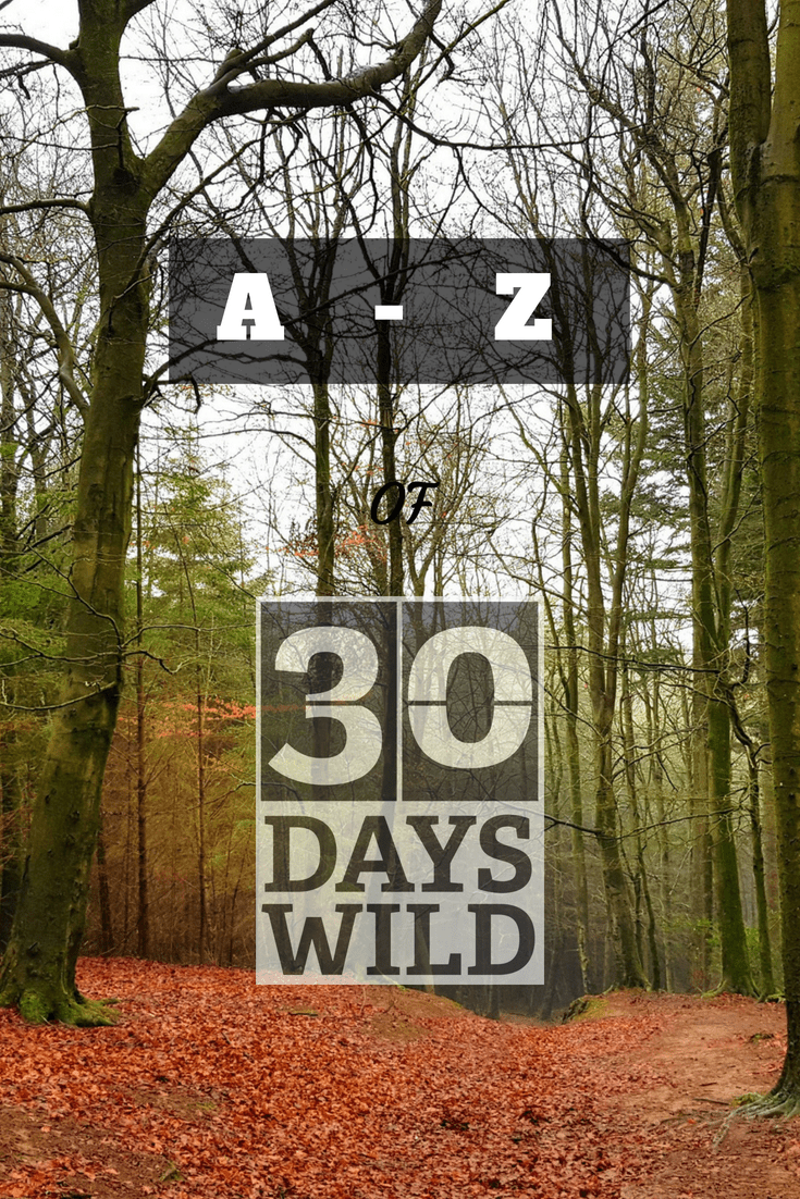 A – Z of 30 Days Wild: A is for… Ants!