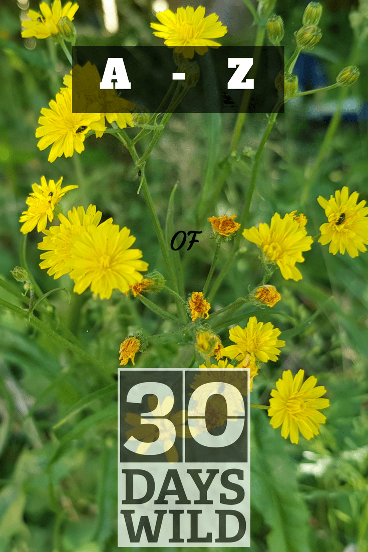 Garden, Growing, Grounding… A-Z of 30 Days Wild