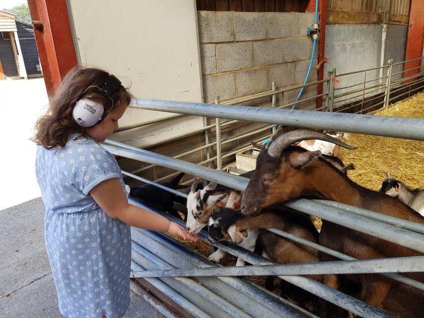 Squiggle feeding goats at farm