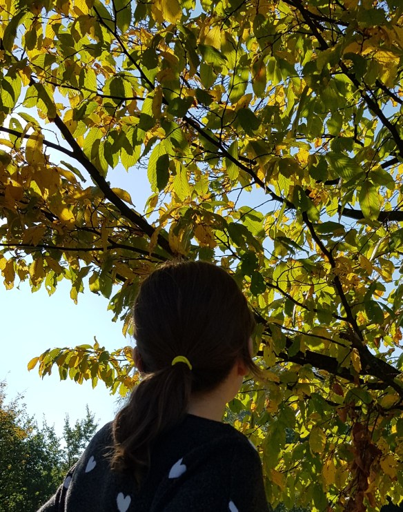 #HelloYellow hair tie looking up at yellow leaves