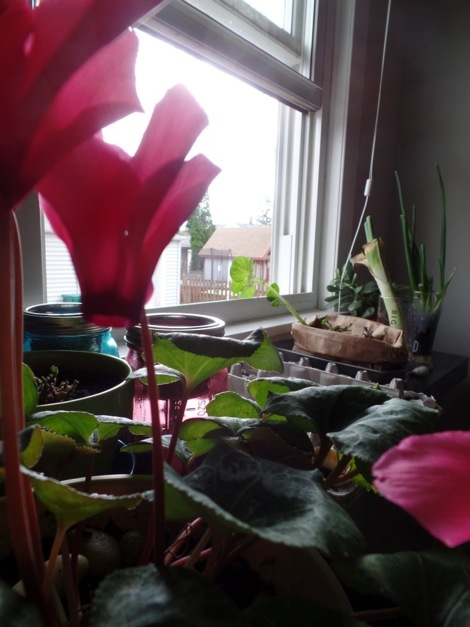 The view of the indoor garden, from the vantage of my pretty pink flowers (which I have had for two years but still don't know what they're called...)