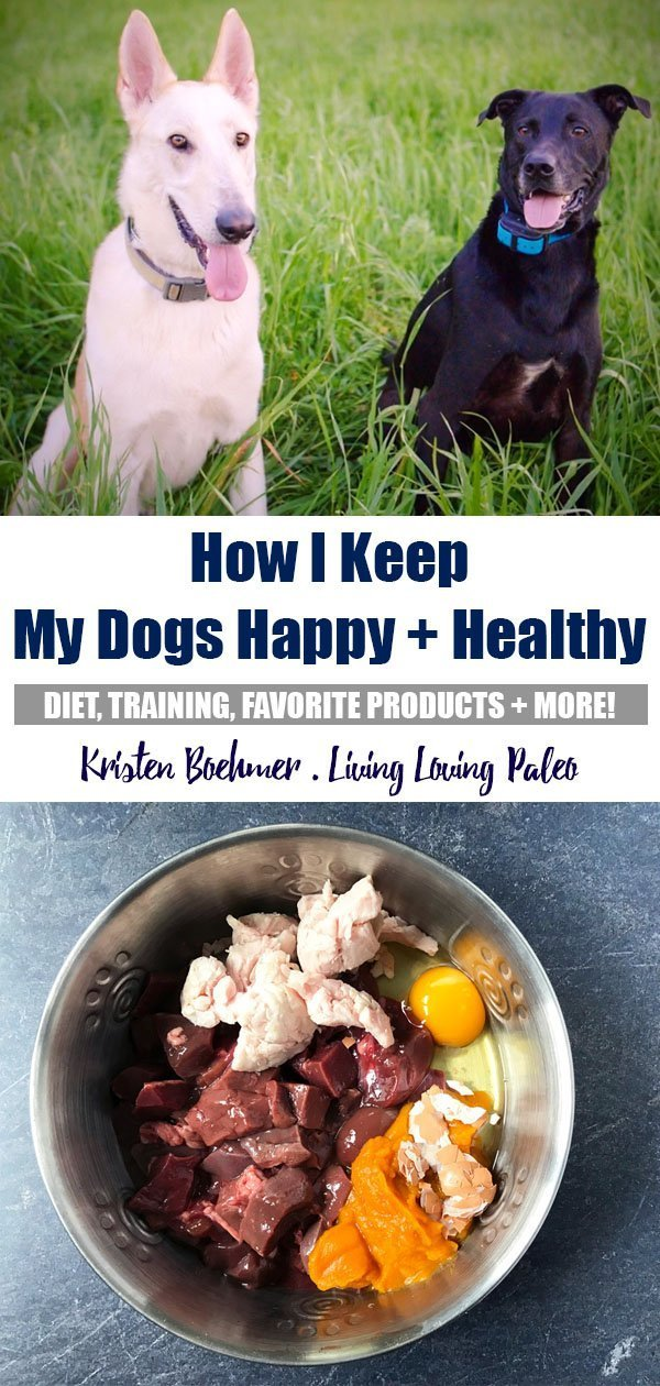 How I Keep My Dogs Happy + Healthy