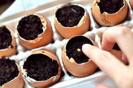 30 Brilliant DIY Egg Shell Seed Starters Crafts Ideas (1)
