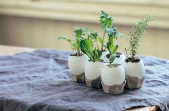 30 Brilliant DIY Egg Shell Seed Starters Crafts Ideas (27)