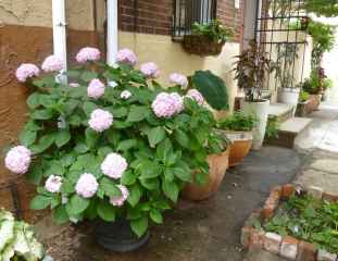 60 Gorgeous Container Gardening Ideas Decorations And Makeover (14)