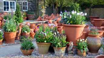 60 Gorgeous Container Gardening Ideas Decorations And Makeover (40)