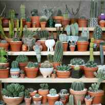 100 Beautiful DIY Pots And Container Gardening Ideas (31)