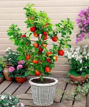40 Beautiful Container Gardening Decor Ideas For Beginners (17)