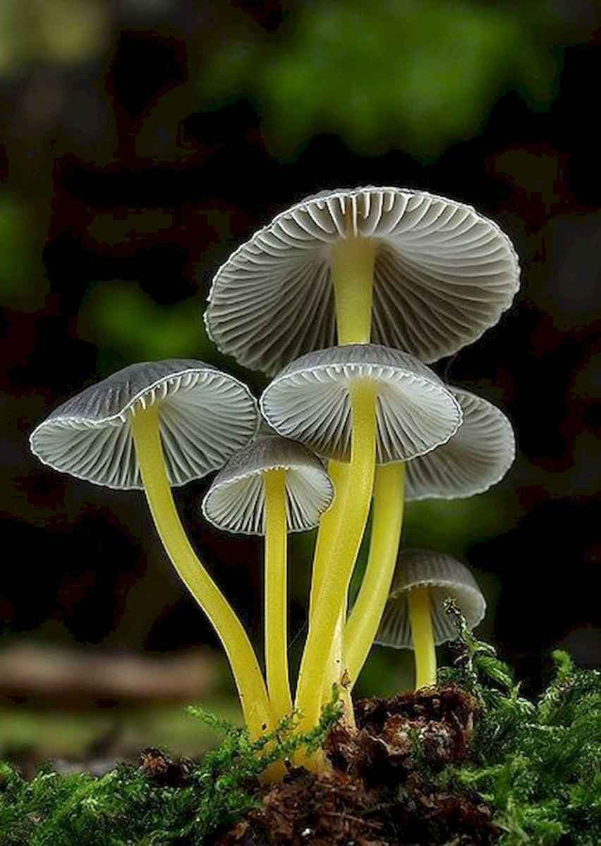 55 Creative Garden Art Mushrooms Design Ideas For Summer (1)