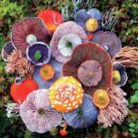55 Creative Garden Art Mushrooms Design Ideas For Summer (20)