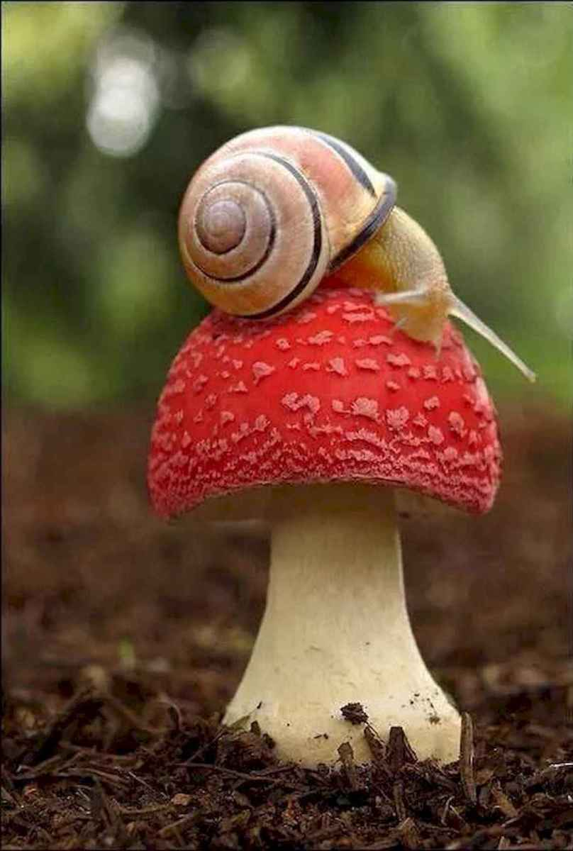 55 Creative Garden Art Mushrooms Design Ideas For Summer (41)