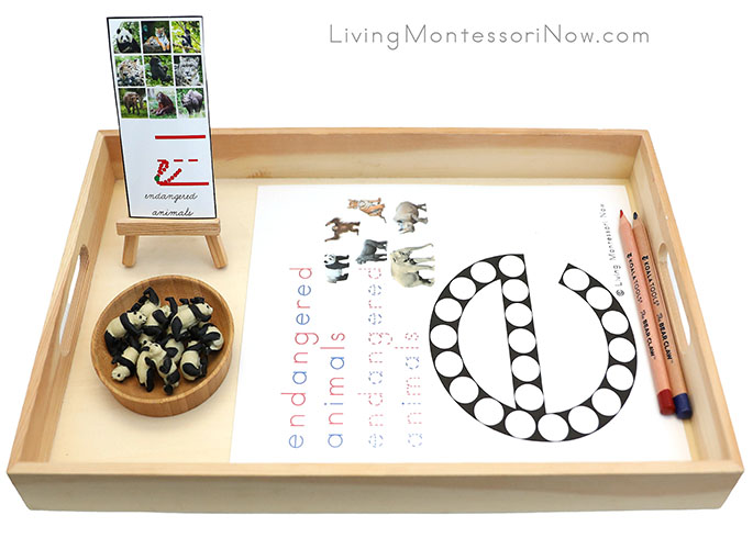 Tray with Endangered Animals Do-a-Dot Printable and Panda Good Luck Minis