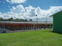 Green Place Farm 1
