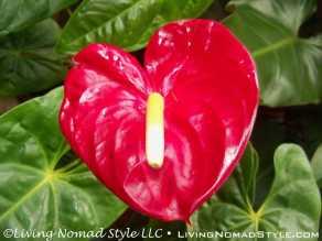 Conservancy Flower 3