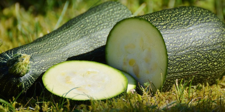 Don't be Caught off Gourd by GMO Zucchini