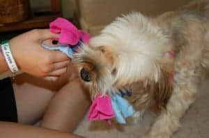 Kids' crafts: Make a braided-rope dog toy