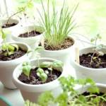 Seed your spring garden indoors for less