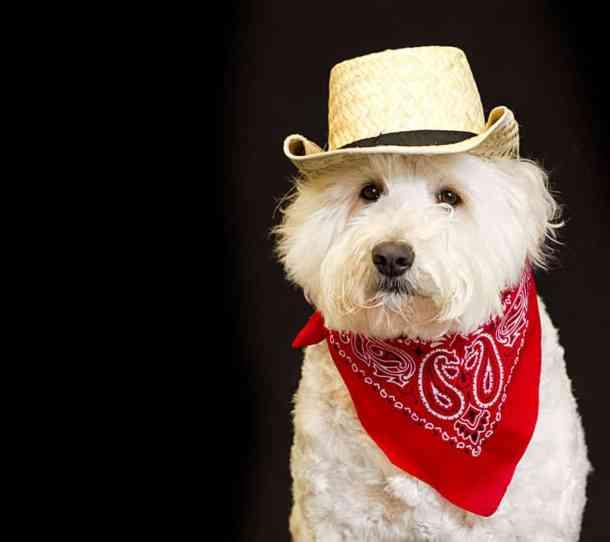dog-in-bandana