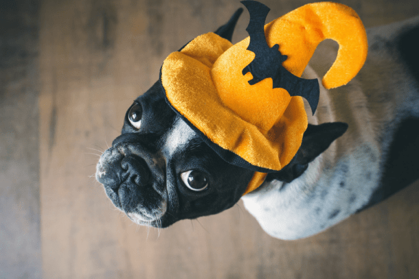 10 cheap and easy halloween costumes for pets living on the cheap stores and online retailers are stocked with adorable and elaborate costumes for our furry best friends our suggestion is use those as a library for ideas solutioingenieria Images