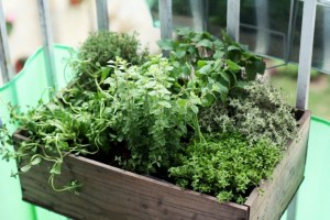Fresh Herbs and Home Gardening Tips