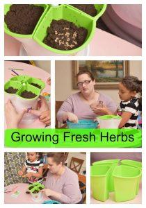 growing fresh herbs