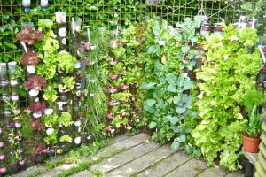 Growing Vegetables in Garden Containers