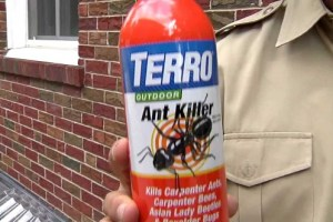 The Best Ant Killer For The Outdoors