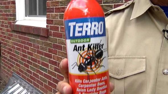 ant killer outdoors
