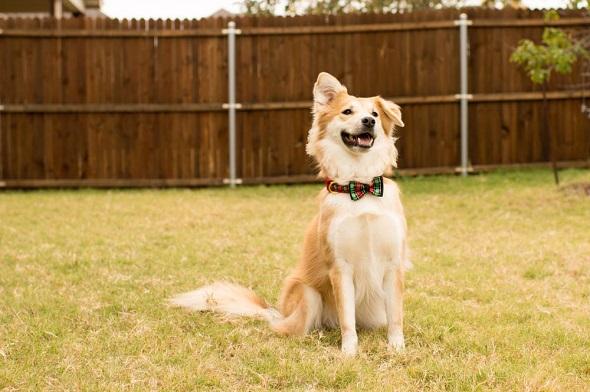 puppy proof backyard