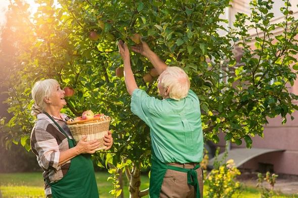 growing fruit trees in backyard