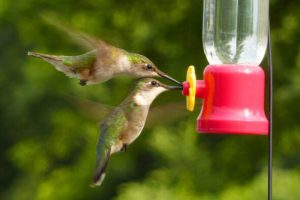 How To Attract Hummingbirds with a Backyard Bird Feeder