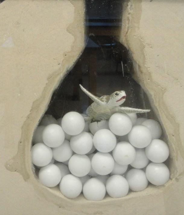 sea turtle nest in the classroom