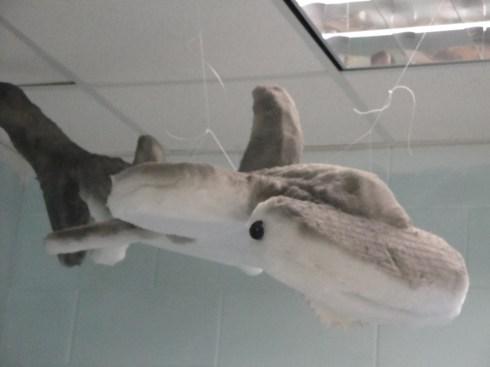 3D ocean animal project