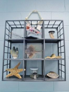 marine-science-specimens-600x800
