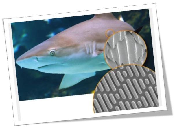 shark-skin-bacteria
