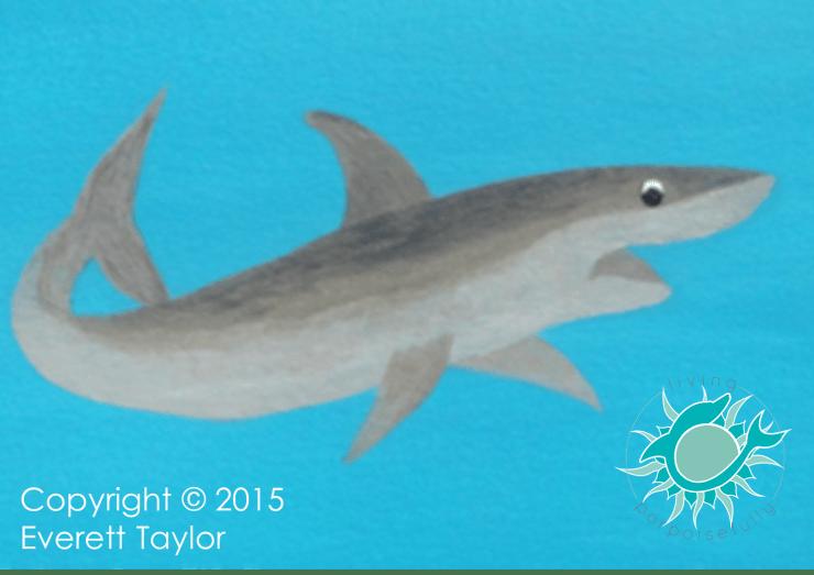 zales tales shark