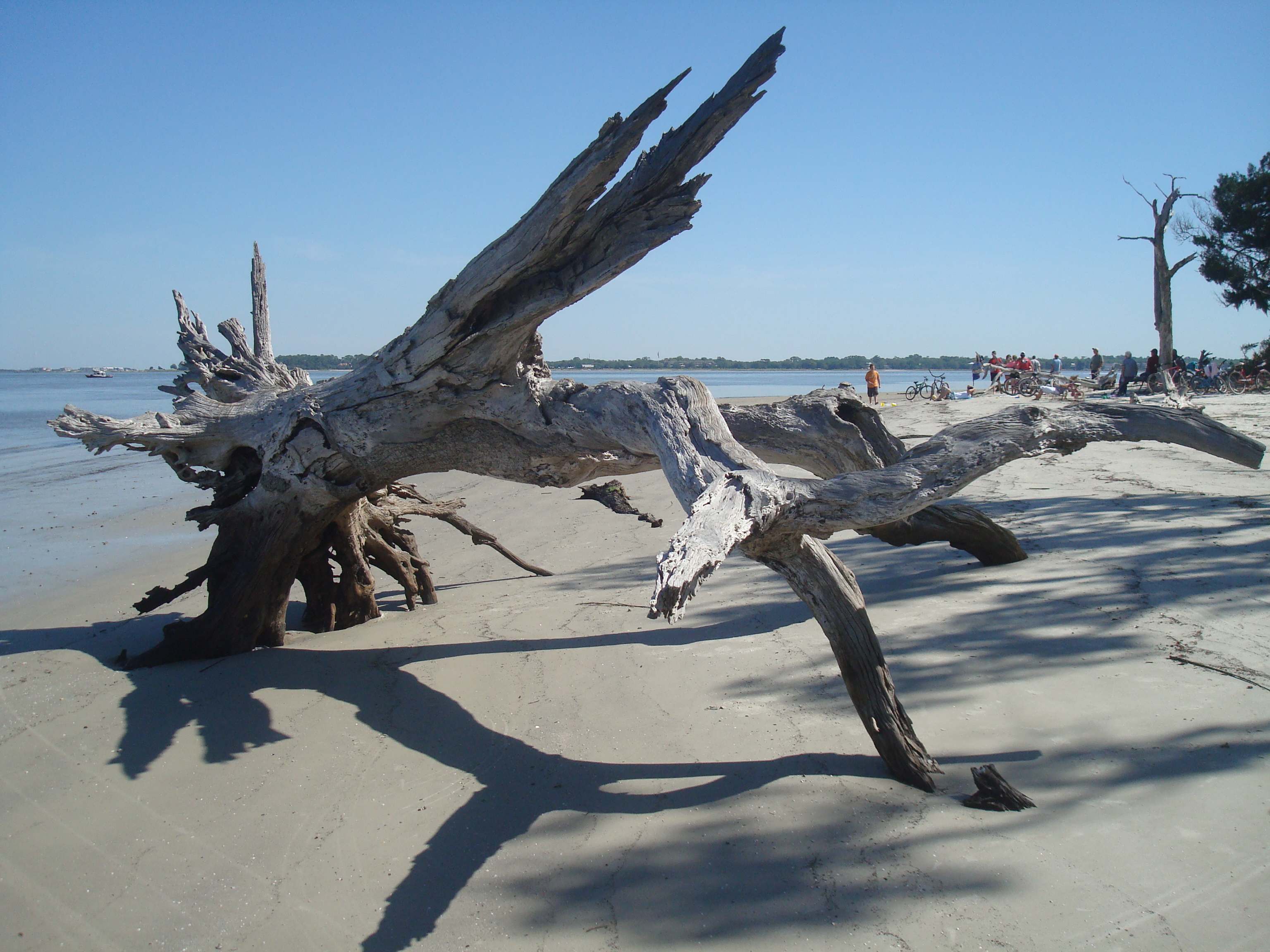 History Of Driftwood Beach Jekyll Island