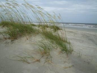 HHI dunes (2)